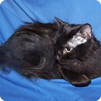 Adopt A Pet :: Ranger - Colorado Springs, CO