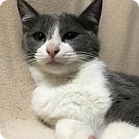 Adopt A Pet :: Cloud - Dallas, TX