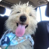 Adopt A Pet :: Timothy - Encino, CA