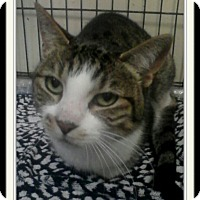 Adopt A Pet :: Bette Davis - Trevose, PA