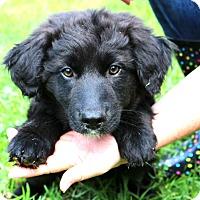 Adopt A Pet :: Levi~adopted! - Glastonbury, CT