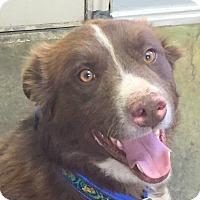 Adopt A Pet :: RILEY - Hurricane, UT