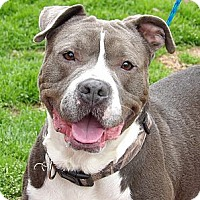 Adopt A Pet :: Zoey(47 lb) URGENT! HELP! - Williamsport, MD
