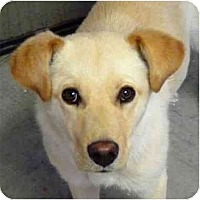Adopt A Pet :: Sarah - YERINGTON, NV