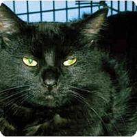 Adopt A Pet :: Lobo - Medway, MA