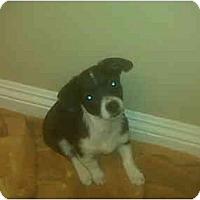 Adopt A Pet :: Sam - Lake Forest, CA