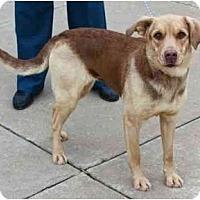 Adopt A Pet :: Clair - Toronto/Etobicoke/GTA, ON