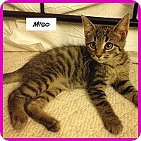 Adopt A Pet :: Miso - Miami, FL