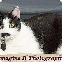 Adopt A Pet :: Burt - Edmond, OK