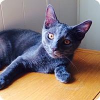 Adopt A Pet :: Lance - Chesterfield Township, MI