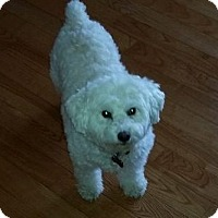 Adopt A Pet :: Lucy - Woodstock, ON