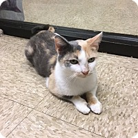 Adopt A Pet :: Nellie - Colmar, PA