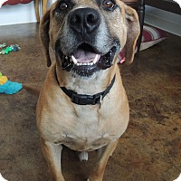 Hound (Unknown Type) Mix Dog for adoption in House Springs, Missouri - JJ