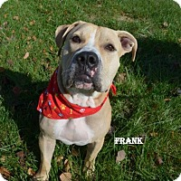 Adopt A Pet :: Frank the Tank - Independence, MO