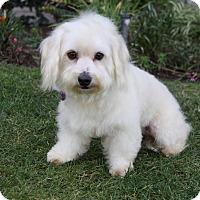 Adopt A Pet :: ALEC - Newport Beach, CA