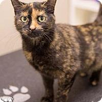 Adopt A Pet :: Tori - Merrifield, VA