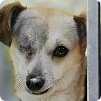 Adopt A Pet :: *CABELLA - Long Beach, CA