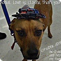Adopt A Pet :: Ike - ST LOUIS, MO