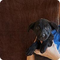 Adopt A Pet :: Cabela - Oviedo, FL