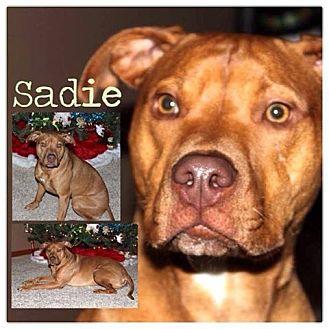 American Pit Bull Terrier Mix Dog for adoption in Garden City, Michigan - Sadie