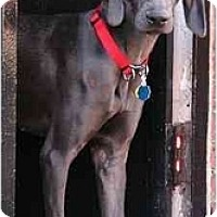 Adopt A Pet :: Nala - Attica, NY