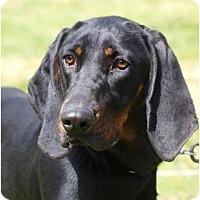 Adopt A Pet :: ClarePENDING - Toronto/Etobicoke/GTA, ON