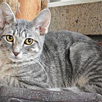 Adopt A Pet :: Elio - Bronx, NY