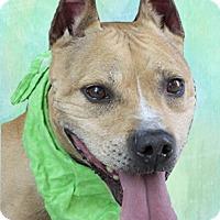 Adopt A Pet :: Chad - Cincinnati, OH