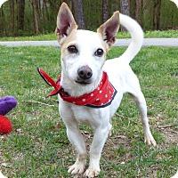 Adopt A Pet :: Bolt - Mocksville, NC