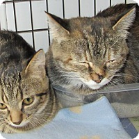 Adopt A Pet :: Nosey - Leamington, ON