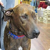 Doberman Pinscher Mix Dog for adoption in Jasper, Georgia - Murphy