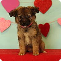 Adopt A Pet :: Leah - Waldorf, MD