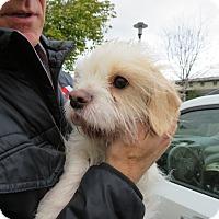 Adopt A Pet :: Alex - San Francisco, CA