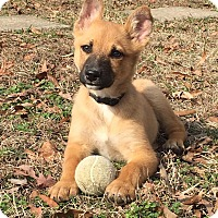 Adopt A Pet :: Kurt - Trenton, NJ