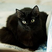 Adopt A Pet :: Satin - Port Charlotte, FL