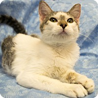 Adopt A Pet :: Fluke - Addison, IL