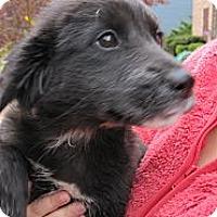 Adopt A Pet :: Amanda - South Jersey, NJ