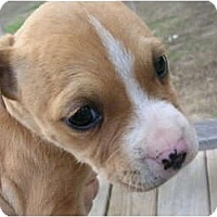 Adopt A Pet :: Soleil - Glastonbury, CT