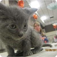 Adopt A Pet :: Bristol - Sterling Hgts, MI