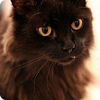 Adopt A Pet :: Freddie - Alexandria, VA