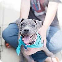 Adopt A Pet :: Demi - San Antonio, TX