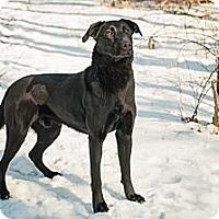 Adopt A Pet :: Eddie - Lewisville, IN