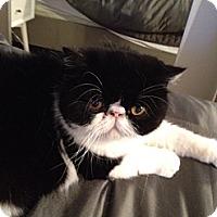 Adopt A Pet :: Charlie - Beverly Hills, CA