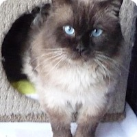 Adopt A Pet :: Sam - Edmonton, AB