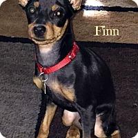 Adopt A Pet :: Finn - Sacramento, CA