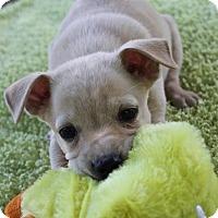 Adopt A Pet :: LD (Lucky Dog) - Winters, CA