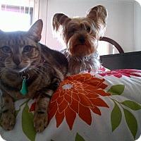 Adopt A Pet :: Persia - Brooklyn, NY