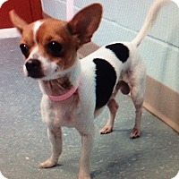 Adopt A Pet :: Jupiter - Orlando, FL