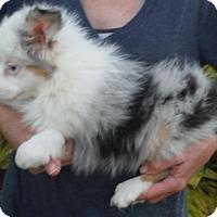 Adopt A Pet :: Petie Deaf - Orlando, FL