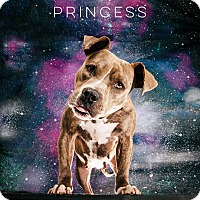 Adopt A Pet :: Princess - Houston, TX